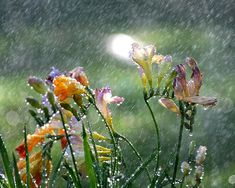 rainflowers_small