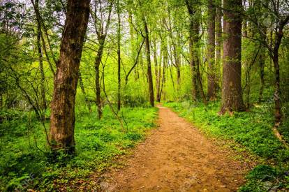 Trail through the forest at Lancaster County Central Park, Penns